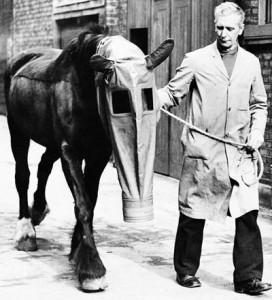Лошадиный противогаз (1940)