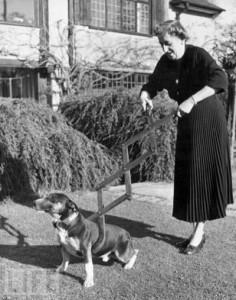 Собаколовка (1940)