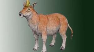 Предки современных коров напоминали морских свинок
