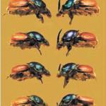 Рис. 3. Аллометрические соотношения у самок (слева) и самцов жука Onthophagus lanista. Чем больше насекомое, тем длиннее у него крылья и ноги, тем крупнее рог у самца (Emlen et al., 2007)