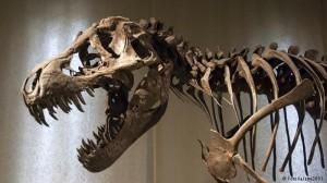 Динозавры: какими они были на самом деле?