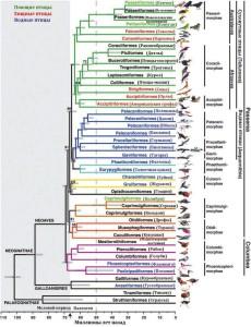 Филогенетическое древо птиц — результат сравнения полных геномов 48 видов. www.sciencemag.org