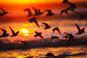 Геном всех птиц