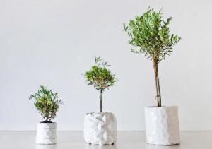 Горшки, которые растут вместе с растениями