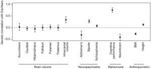 Рис. 2. Генетические корреляции между продолжительностью учебы (EduYears) и другими признаками: размерами отдельных подкорковых структур и мозга в целом (Brain volume), нейропсихиатрическими заболеваниями (Neuropsychiatric), умственными способностями (Cognitive performance), невротизмом (Neuroticism), индексом массы тела (BMI) и ростом (Height). Рисунок показывает, что аллели, повышающие вероятность того, что индивид получит хорошее образование, также ассоциируются с повышенным интеллектом, большим объемом мозга, пониженной вероятностью болезни Альцгеймера и эмоциональной устойчивостью (низким невротизмом). Рисунок из обсуждаемой статьи в Nature